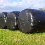 Bails of hay with plastic wrap
